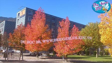 Hội thảo du học Thụy Sĩ, trường Vatel danh giá - Ảnh 1.