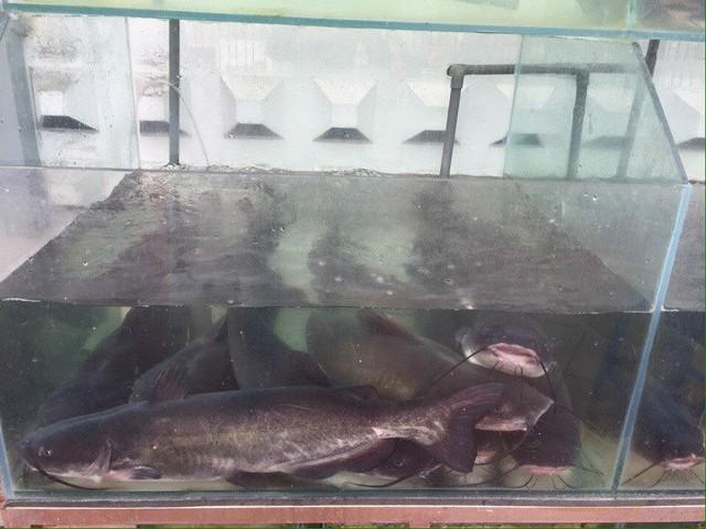 """3 """"điểm trừ"""" khiến nhà hàng Chả cá Hà Thành mất khách - Ảnh 8."""