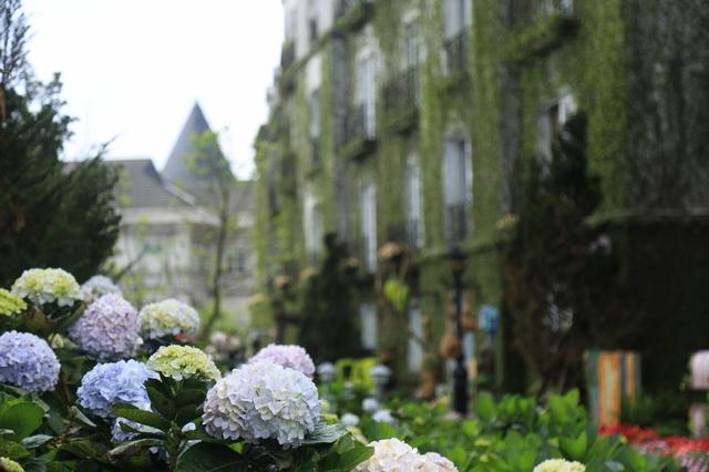 Đến Bà Nà Hills ngắm hơn 100 loài hoa đua nở - Ảnh 2.