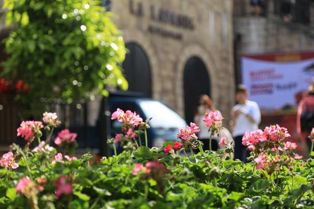 Đến Bà Nà Hills ngắm hơn 100 loài hoa đua nở - Ảnh 5.
