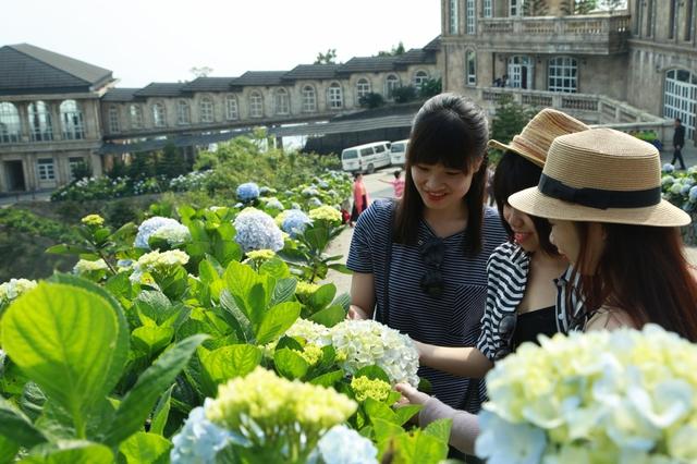 Đến Bà Nà Hills ngắm hơn 100 loài hoa đua nở - Ảnh 8.