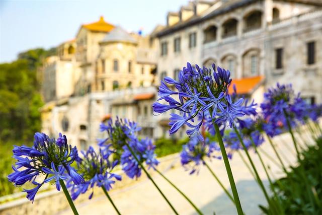Đến Bà Nà Hills ngắm hơn 100 loài hoa đua nở - Ảnh 9.