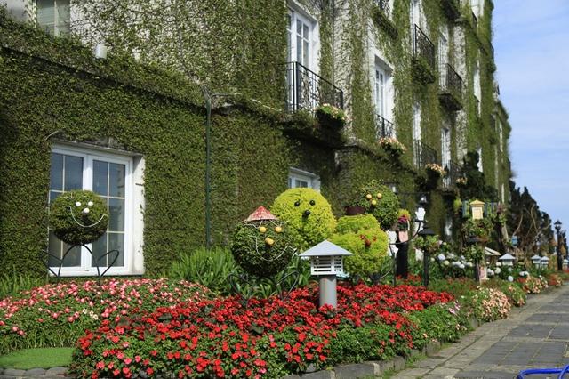 Đến Bà Nà Hills ngắm hơn 100 loài hoa đua nở - Ảnh 10.
