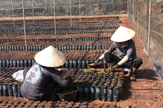 Câu chuyện đằng sau ly cà phê chất lượng Việt - Ảnh 3.
