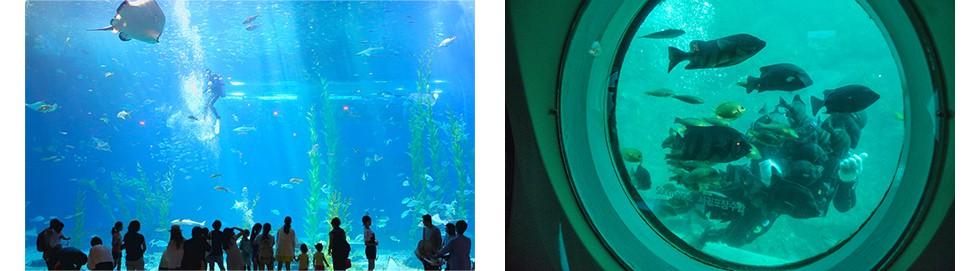 """Khám phá vẻ đẹp thiên đường của """"Hawaii Hàn Quốc"""" – Đảo Jeju - Ảnh 7."""