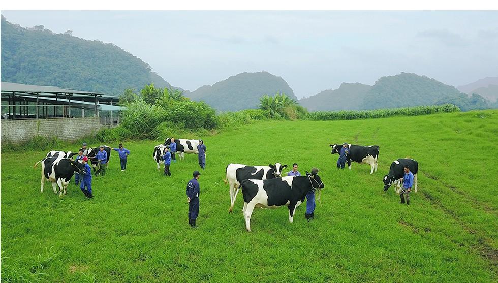 Hoa hậu Bò sữa Mộc Châu – 15 năm vinh danh những người làm Nghề chăn nuôi bò sữa - Ảnh 12.