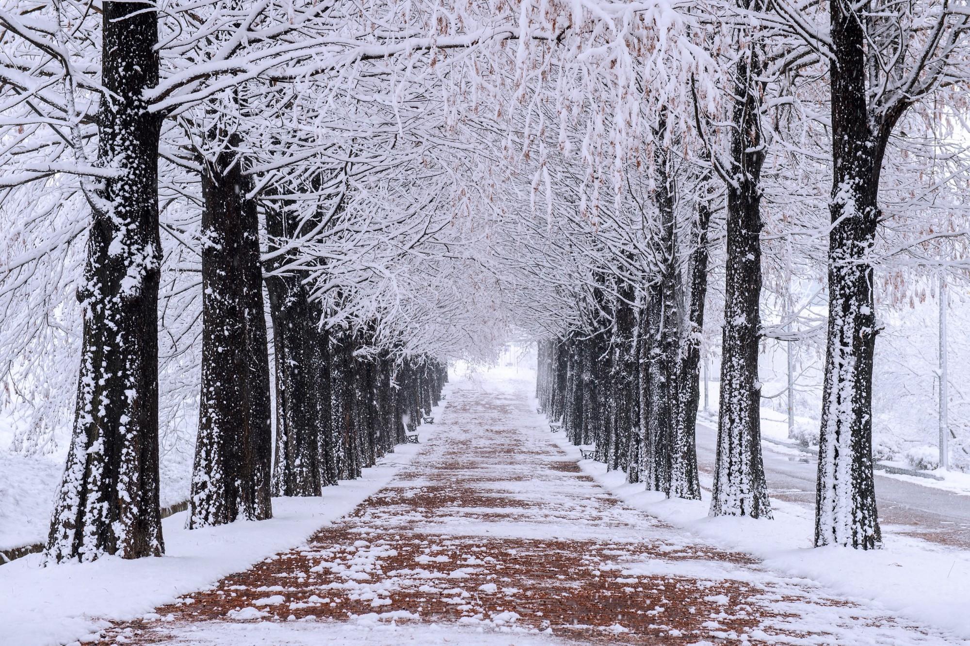 Lạc trong bản tình ca của mùa đông Hàn Quốc - Ảnh 1.