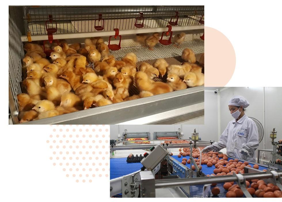 """Nữ hoàng trứng gà """"sạch không tỳ vết"""" tiêu chuẩn Nhật Bản: Giờ là lúc chúng tôi cần nhà đầu tư đồng hành cùng mình nhất - Ảnh 2."""