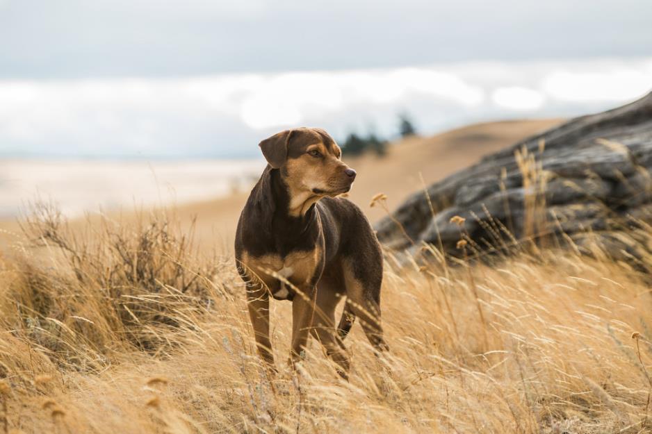 """A Dog's Way Home đốn tim các """"sen"""" bằng độ cute vô đối của chú cún Bella - Ảnh 3."""