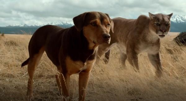 """A Dog's Way Home đốn tim các """"sen"""" bằng độ cute vô đối của chú cún Bella - Ảnh 4."""