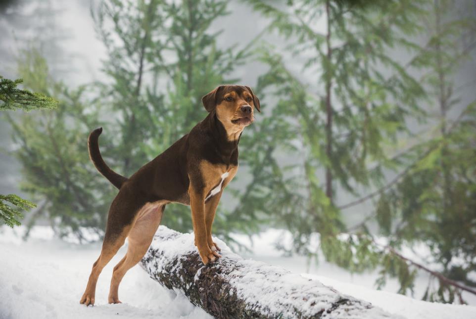 """A Dog's Way Home đốn tim các """"sen"""" bằng độ cute vô đối của chú cún Bella - Ảnh 8."""