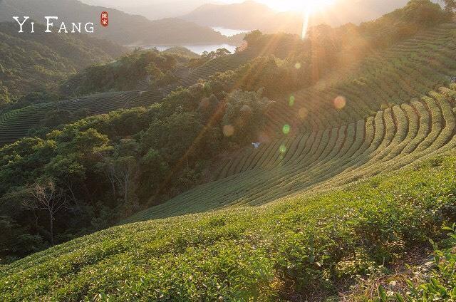 Cùng Quang Đại khám phá Đài Loan qua 3 vị trà xanh mía tuyệt phẩm của Yifang - Ảnh 1.