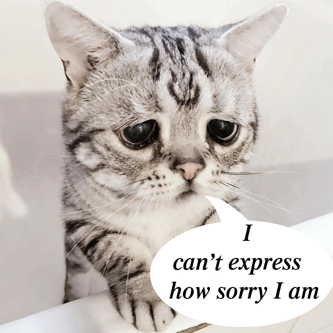 """Langmaster: Tuyển tập 40 câu """"xin lỗi"""" hay nhất trong tiếng Anh - Ảnh 3."""