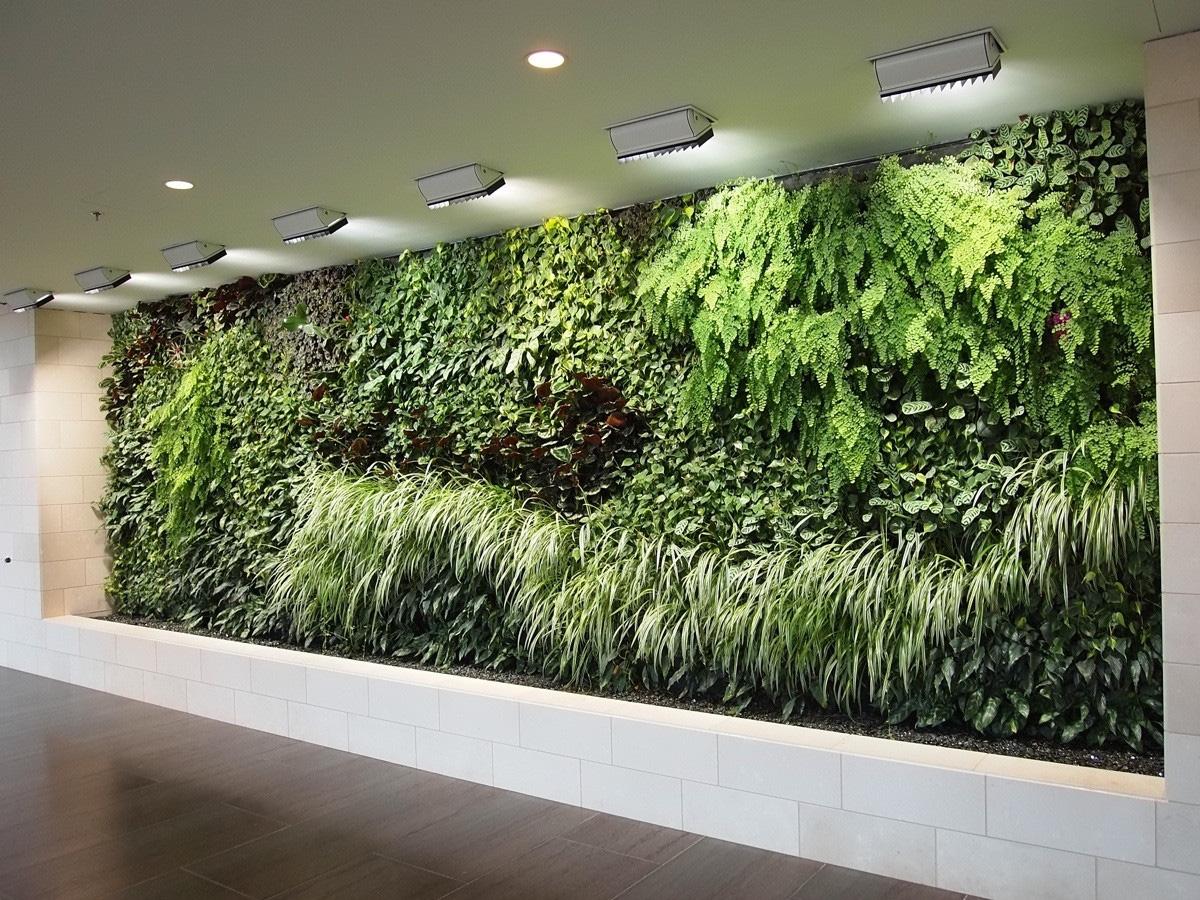 Tiếp nối thành công thử thách detox siêu bụi mịn, những bức tường cây đầu tiên dần hình thành tại 3 trường đại học của Việt Nam - Ảnh 7.