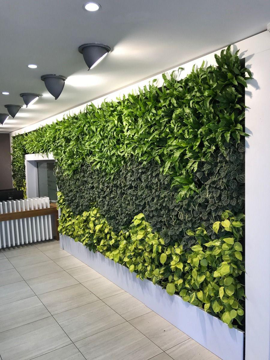 Tiếp nối thành công thử thách detox siêu bụi mịn, những bức tường cây đầu tiên dần hình thành tại 3 trường đại học của Việt Nam - Ảnh 8.