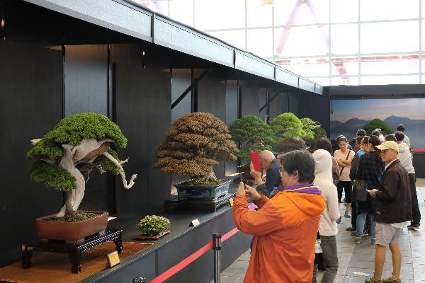 Khám phá lễ hội Bonsai & Suiseki Châu Á - Thái Bình Dương tại Suối Tiên - Ảnh 2.