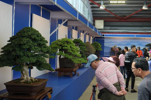 Khám phá lễ hội Bonsai & Suiseki Châu Á - Thái Bình Dương tại Suối Tiên - Ảnh 3.