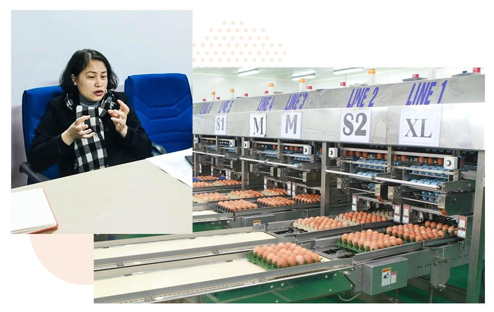 """Nữ hoàng trứng gà """"sạch không tỳ vết"""" tiêu chuẩn Nhật Bản: Giờ là lúc chúng tôi cần nhà đầu tư đồng hành cùng mình nhất - Ảnh 5."""