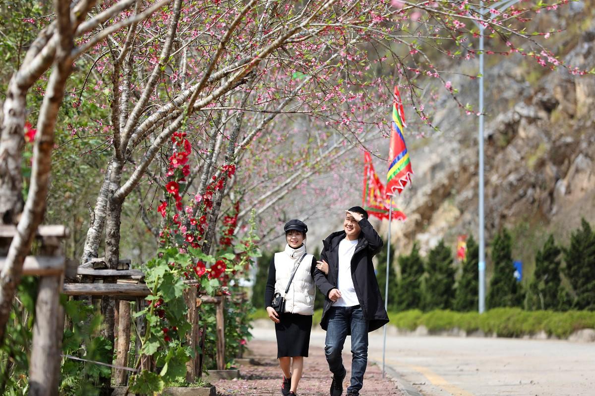 Cận cảnh thiên đường hoa nở trong mây ở Fansipan - Ảnh 1.