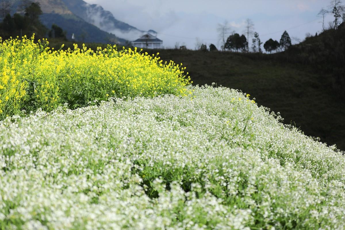 Cận cảnh thiên đường hoa nở trong mây ở Fansipan - Ảnh 6.