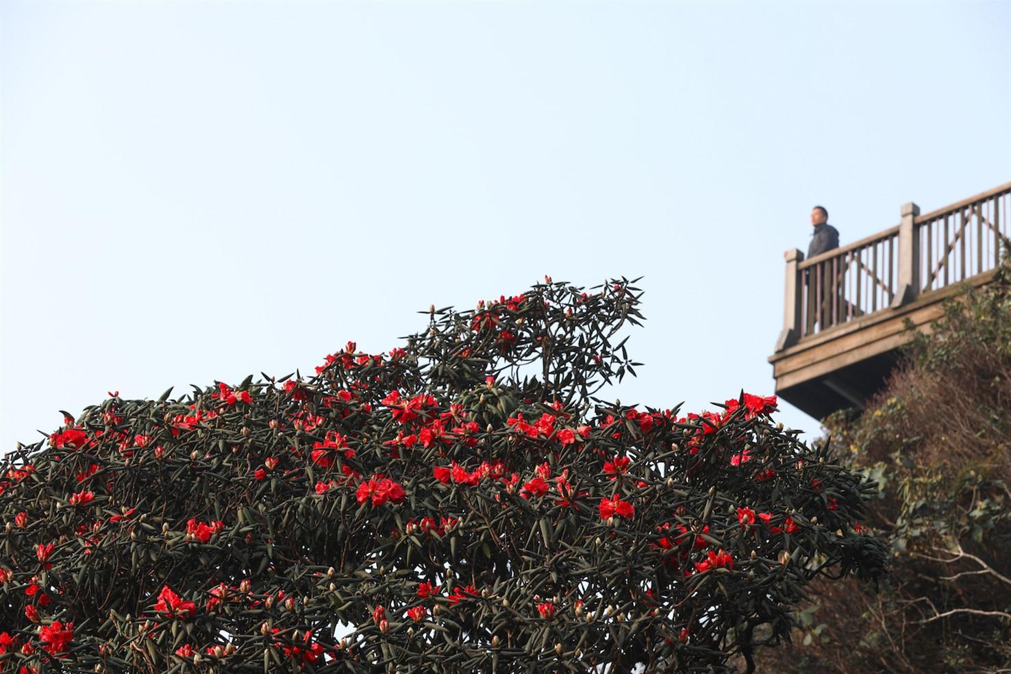 Ngỡ ngàng biển hoa tím đẹp như cổ tích tại Fansipan - Ảnh 1.