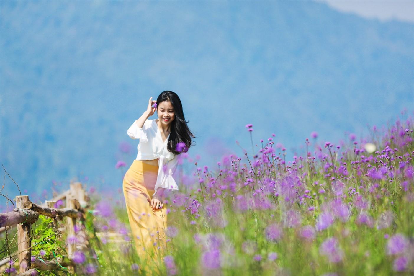 Ngỡ ngàng biển hoa tím đẹp như cổ tích tại Fansipan - Ảnh 4.