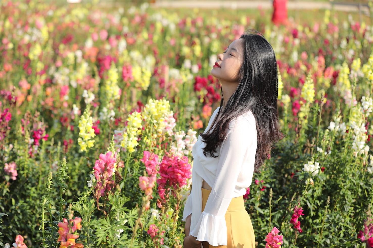 Ngỡ ngàng biển hoa tím đẹp như cổ tích tại Fansipan - Ảnh 6.