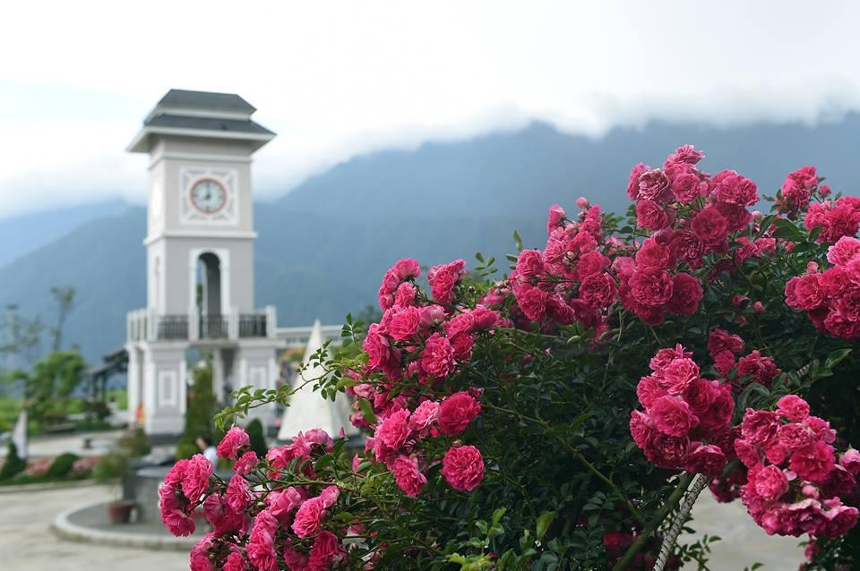 Ngỡ ngàng biển hoa tím đẹp như cổ tích tại Fansipan - Ảnh 8.