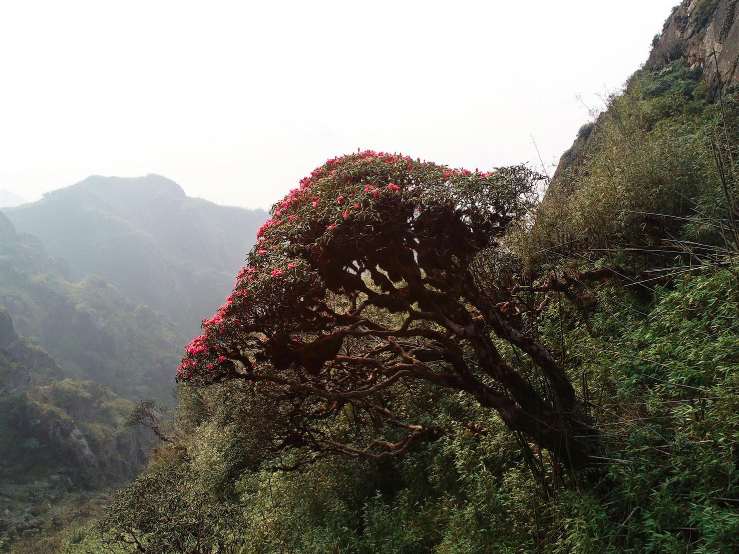 Xách ba lô lên và khám phá vương quốc hoa đỗ quyên - Ảnh 1.