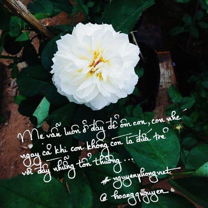 Ngày của Mẹ, đây là cách cộng đồng gửi lời yêu thương đến mẹ của mình - Ảnh 6.