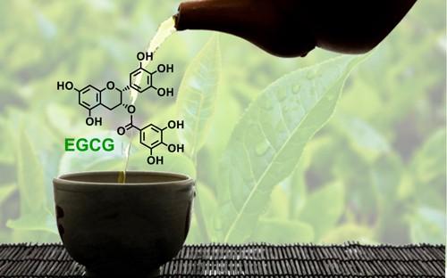Hợp chất EGCG trong trà xanh tốt cho sức khỏe thế nào? - Ảnh 2.
