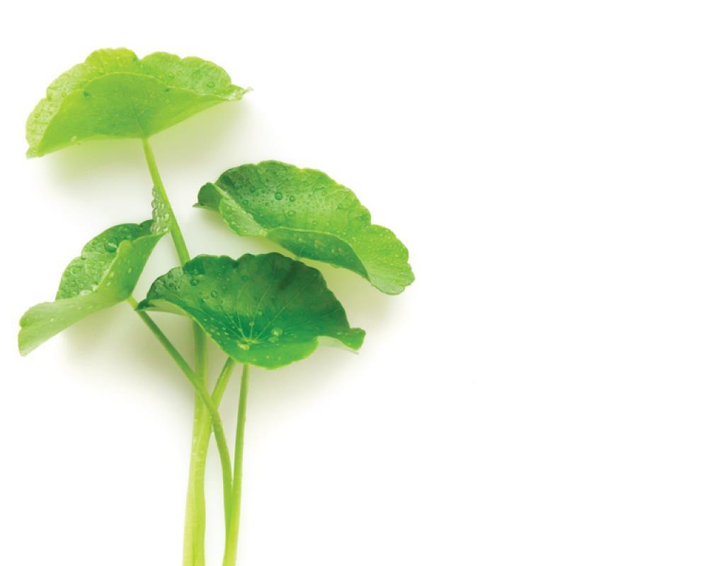 Lá cỏ hổ - Tên cực lạ, công dụng cực vi diệu, phải áp dụng để da căng mướt như pha lê! - Ảnh 1.