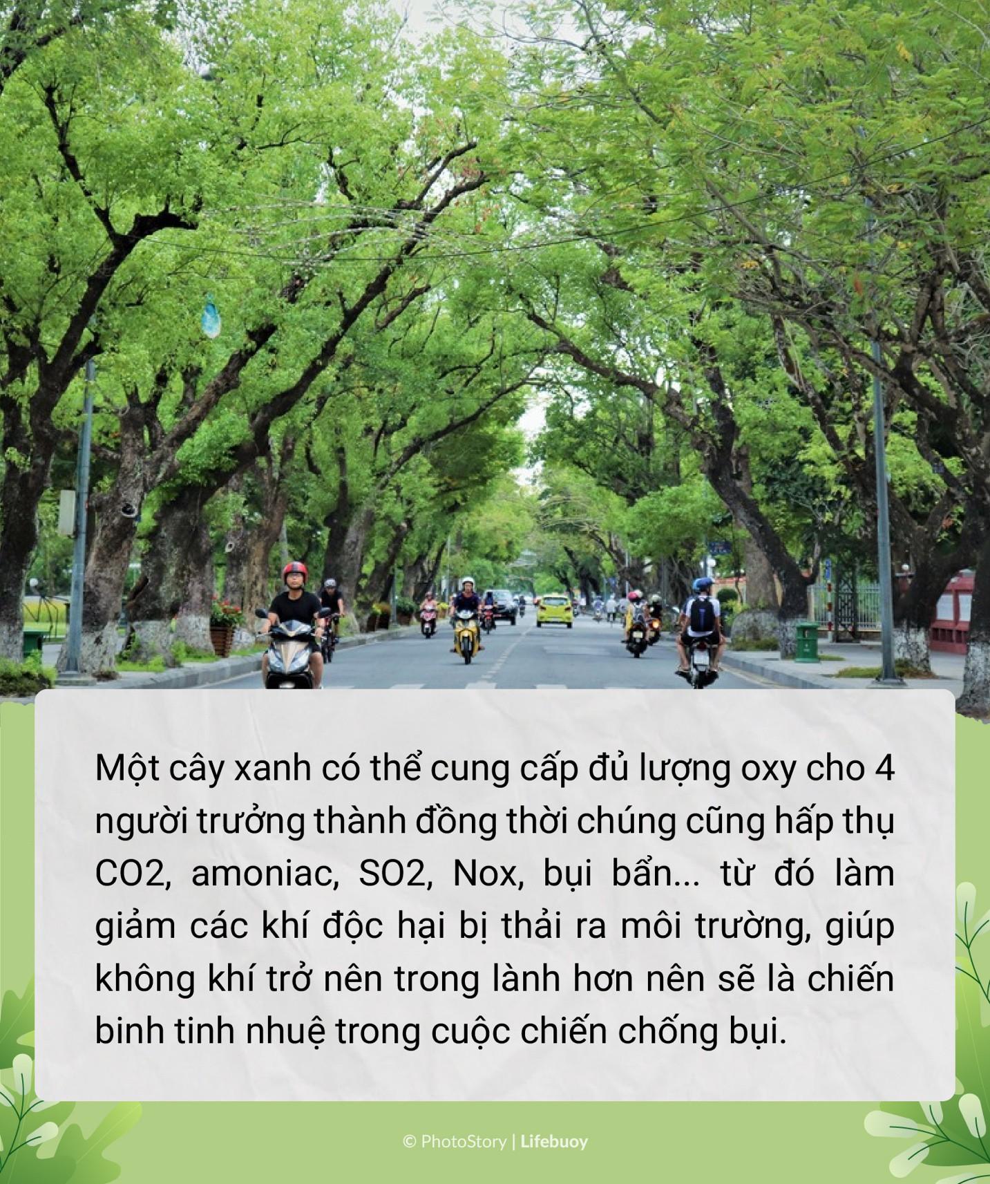 Trồng cây vây bụi mịn - Trend vì môi trường siêu hot thời điểm hiện tại - Ảnh 8.