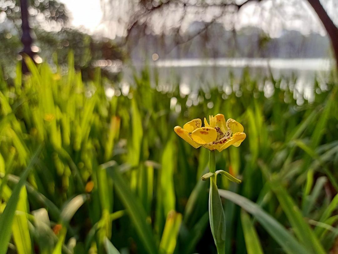 Hoa lá thì ai chả chụp được, nhưng chỉ có cách này mới làm ảnh của bạn hút likes hơn nghìn lần! - Ảnh 2.