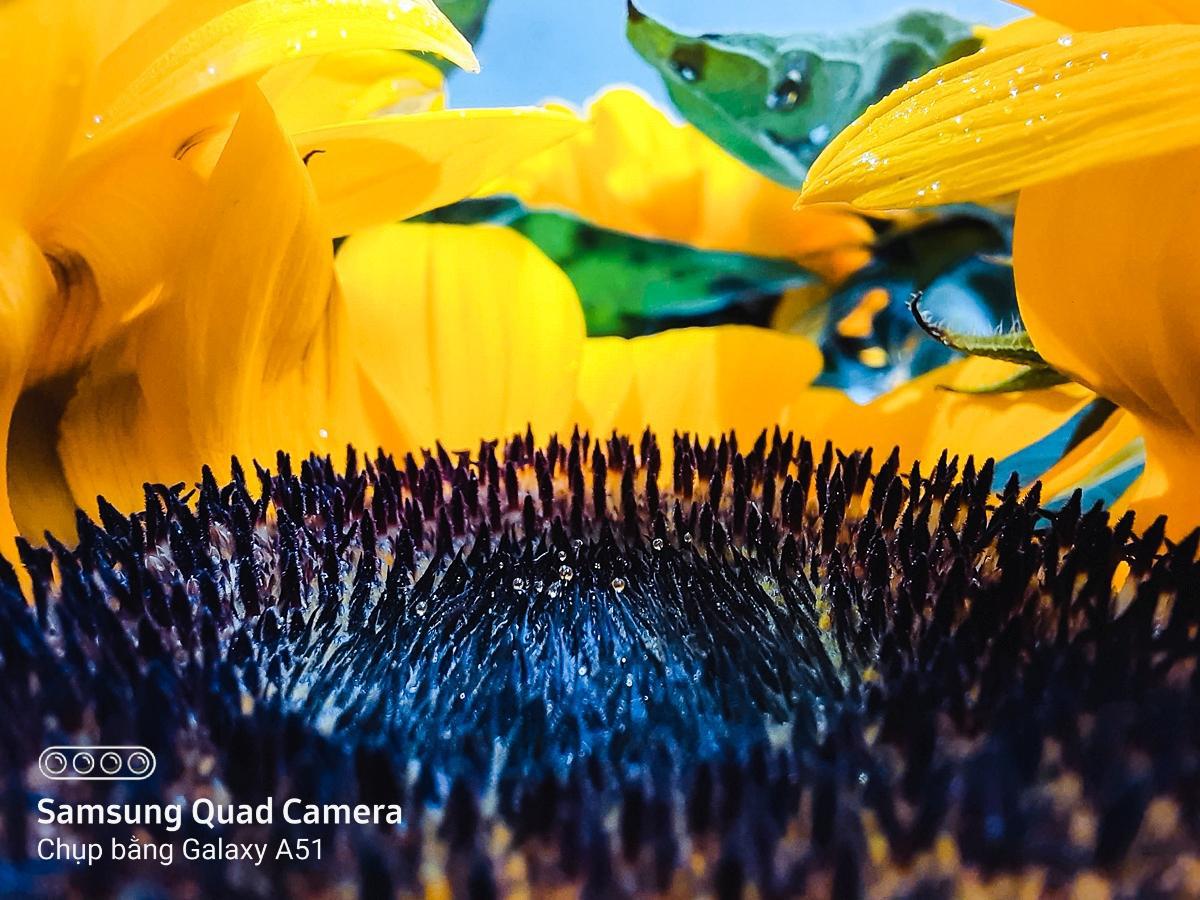 Hoa lá thì ai chả chụp được, nhưng chỉ có cách này mới làm ảnh của bạn hút likes hơn nghìn lần! - Ảnh 4.