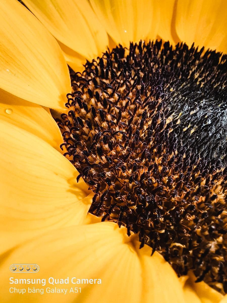Hoa lá thì ai chả chụp được, nhưng chỉ có cách này mới làm ảnh của bạn hút likes hơn nghìn lần! - Ảnh 5.