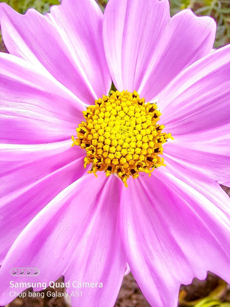 Hoa lá thì ai chả chụp được, nhưng chỉ có cách này mới làm ảnh của bạn hút likes hơn nghìn lần! - Ảnh 7.