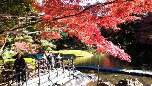 Nhật Bản - Tuyệt sắc giao mùa khiến bạn phải muốn đặt chân đến ngay - Ảnh 2.