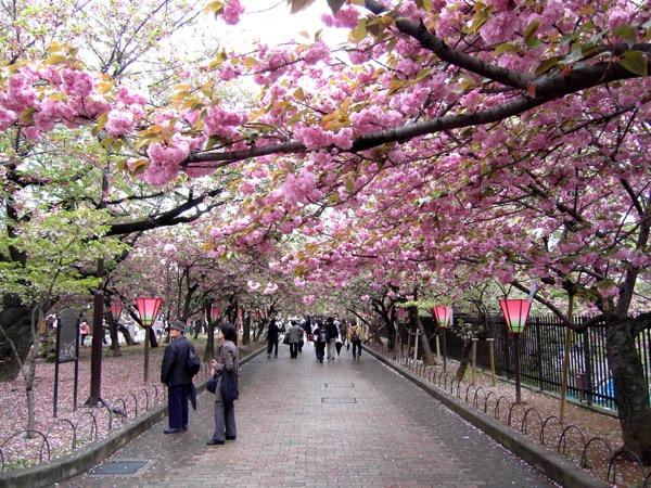 Nhật Bản - Tuyệt sắc giao mùa khiến bạn phải muốn đặt chân đến ngay - Ảnh 12.