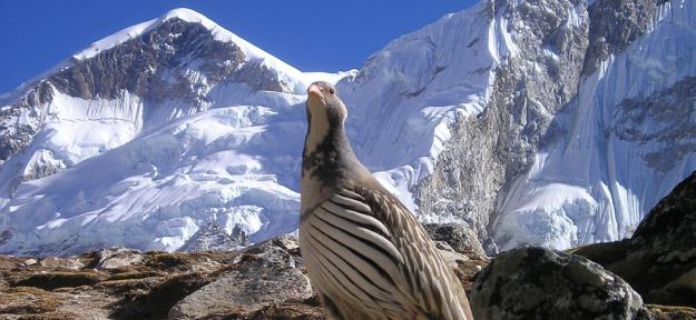 Nepal – Vùng đất vàng cho những chuyến hành trình để đời - Ảnh 6.