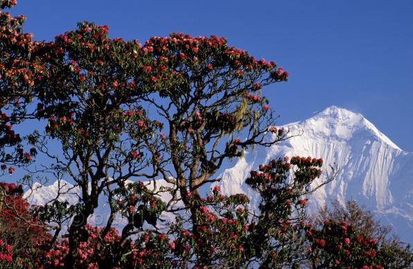 Nepal – Vùng đất vàng cho những chuyến hành trình để đời - Ảnh 7.