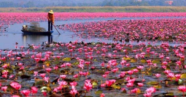 Có một Thái Lan góc nào cũng trở thành nơi sống ảo rực sắc màu trong năm mới - Ảnh 14.