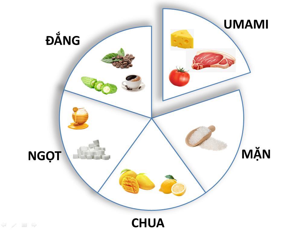 Umami- Vị cơ bản thứ năm xuất hiện trong hầu hết thực phẩm - Ảnh 1.