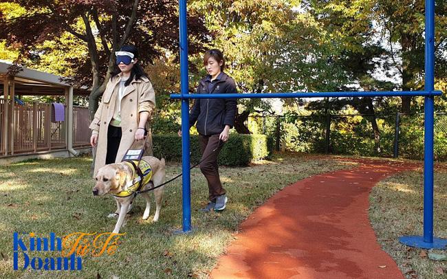 Tìm hiểu về ngôi trường dạy chó siêu độc đáo tại Hàn Quốc - Ảnh 1.