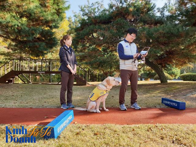 Tìm hiểu về ngôi trường dạy chó siêu độc đáo tại Hàn Quốc - Ảnh 3.