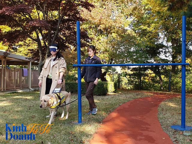 Tìm hiểu về ngôi trường dạy chó siêu độc đáo tại Hàn Quốc - Ảnh 4.