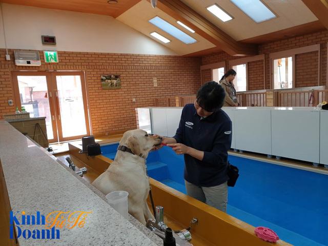Tìm hiểu về ngôi trường dạy chó siêu độc đáo tại Hàn Quốc - Ảnh 5.
