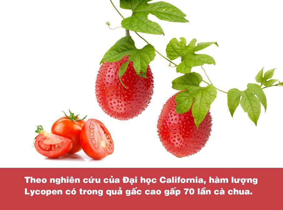 Chứa hàm lượng dưỡng chất cao gấp nhiều lần cà chua, cà rốt; gấc chính là thực phẩm vàng dành cho lá gan - Ảnh 2.