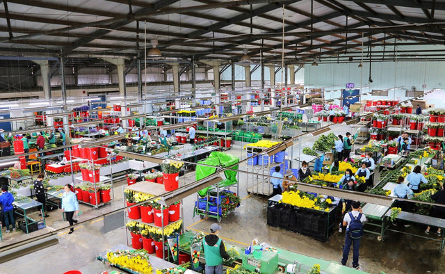 Dalat Hasfarm: Làm nông nghiệp phải phát triển bền vững - Ảnh 3.