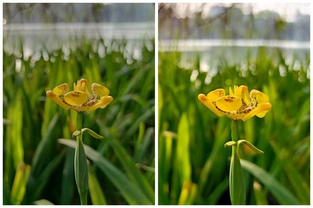 5 tính năng trên OPPO F11 giúp những bức ảnh cứ chụp ra là đẹp ngay và luôn - Ảnh 1.